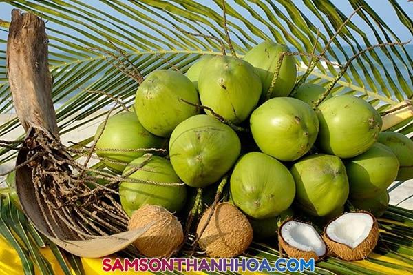 Dừa tươi Sầm Sơn