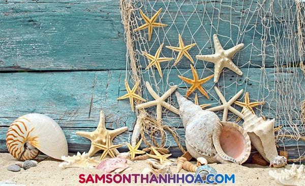 Vỏ ốc biển Sầm Sơn