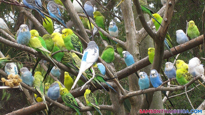 Vườn chim nhiệt đới